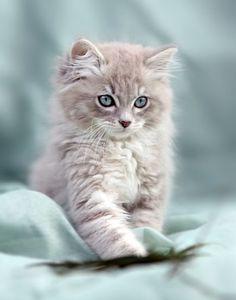The cutest kitten ever <3