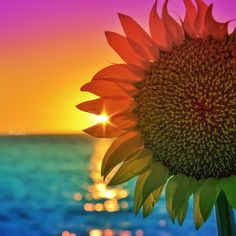 Edited with #DeluxeFX app #colorful #sunset #sunflower #izkiz #iphone