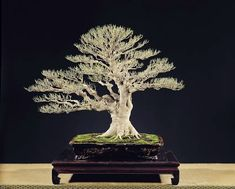 Right Bonsai Tree Pots Is Very Important Indoor Bonsai Tree, Bonsai Art, Bonsai Trees, Sculptures, Lion Sculpture, Dandelion, Flora, Japan, Awesome