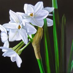 Paperwhites 10x10, painting by artist M Collier