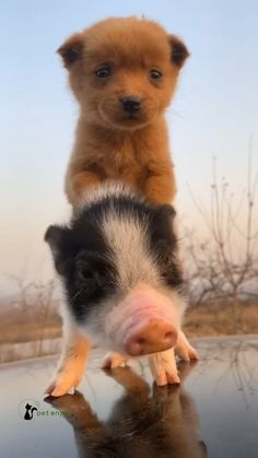 Baby Farm Animals, Baby Animals Pictures, Cute Animal Photos, Cute Animal Videos, Cute Little Animals, Cute Funny Animals, Funny Animal Pictures, Animals And Pets, Cute Pets