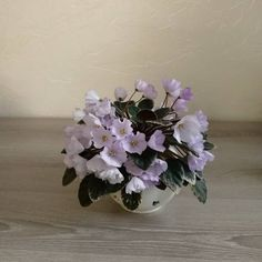 Rob's Pewter Bells 07/06/1992 (R. Robinson) Semidouble silver-light blue large bell. Variegated dark green and white, pointed, quilted. Semiminiature #RobsPewterBells #VioletBarn #SemiminiatureAfricanViolet #SemiViolet #SemiMiniViolet  #AVSA #AfricanViolet #IndoorPlant #Houseplant #saintpaulia #senpolia #AfricanVioletLovers #fialka #AfricanVioletSocietyOfAmerica #AfricanVioletBlooming #AfricanVioletMania #flowers #bloom #fialki #flowerstagram #FlowersOfInstagram #AfricanVioletsOfInstagram Leafy Plants, Flowering Plants, Planting Flowers, Easy House Plants, Saintpaulia, African Violet, Carnivorous Plants, Natural Garden, Flower Pictures
