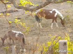 Tú lote en Sierras Córdoba. Vistas al río y sierras. http://villa-carlos-paz.clasiar.com/terrenos-en-montana-id-238793
