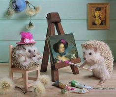 Tiny Hedgehogs Play Dress Up and Pose for Silly Photos - - Tiny Hedgehogs Play Dress Up and Pose for Silly Photos - World's largest collection of cat memes and other animals. Baby Animals Super Cute, Cute Little Animals, Cute Funny Animals, Funny Cats, Cats Humor, Funny Horses, Happy Hedgehog, Cute Hedgehog, Pygmy Hedgehog
