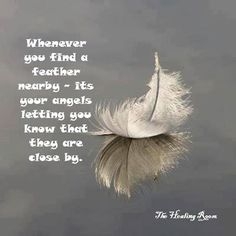 Whenever you find a feather nearby, it's your angels letting you know they are close. Feather Quotes, Wing Quotes, Feather Signs, Collateral Beauty, Angel Prayers, I Believe In Angels, My Guardian Angel, Angel Pictures, Ghost Pictures