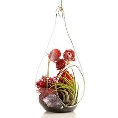 Beautiful terrarium set with air plant, crystal, moss, dried flowers, and onyx sand