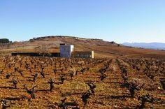 Losada Vinos de Finca en Cacabelos, Castilla y León