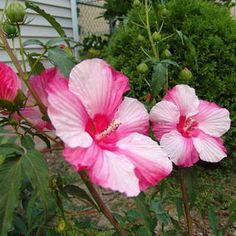 Photo: Indu Singh | thisoldhouse.com | from Best Garden Flowers for Color All Summer