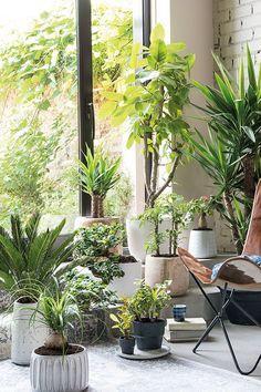 Een ruim assortiment aan groene kamerplanten vind je bij Intratuin; laat je inspireren op onze site of bekijk het assortiment in één van onze winkels. Green Rooms, Garden Care, Green Plants, Apartment Interior, Cottage Homes, Dream Garden, Indoor Garden, Trees To Plant, Houseplants