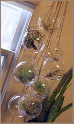 DIY Air Plant Chandelier