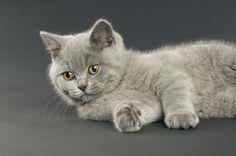 Pasożyty u kotów:  http://kobieta.info.pl/zwierzta-w-domu/1626-pasoyty-u-kotow