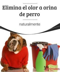 Elimina el olor a orina de perro naturalmente Os queremos enseñar cómo eliminar el olor a orina de perro naturalmente, sin usar productos que sean dañinos tanto para los animales, como para los humanos.