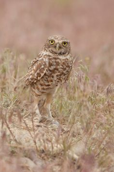 Hunting Mother Owl by Carlos Caceres on 500px