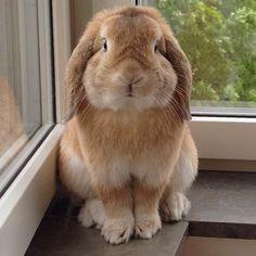 Nobody Puts Bunny In A Corner