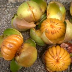 """Dengen fruit"" from Soroako, South Sulawesi - Indonesia is kind of orange in taste a little bit sour and sweet"