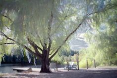 I want this tree for a Lazy Afternoon!!  Weeping willow tree dreamy summer day canoe lake by SherriConley, $30.00