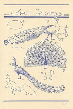 #Pavo #Real #Animales #Naturaleza #Dibujos #Ilustraciones #Artistas #Afiches