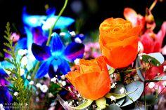 Orange Rose by David Hie on 500px
