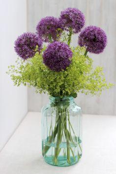 Allium in a simple design