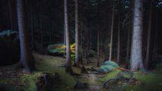 Dark Forest - Forest mood in Saxon Switzerland, Germany. Russian Landscape, Dark Forest, Switzerland, Germany, Plants, Deutsch, Plant, Planets