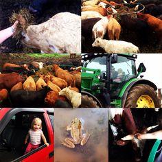 Thursday on the farm ❤️❤️ xxx