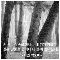 흔들리지 않는 나무는 없다. 아픔을 먹고 자란다. 척박한 땅의 고구마가 더 맛있다. 가뭄을 이긴 나무가 더 단단하다. 고진감래.