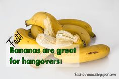 Banana Facts - 10 Amazing facts about bananas you never knew - Did you know that bananas are great for hangovers. Visit us for more banana facts. Fact-o-Rama Home Recipes, Great Recipes, Banana Facts, Banana Uses, Insect Bites, Anything Is Possible, You Never Know, Fun Facts, Berries