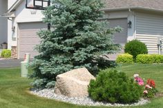 landscape island front yard - Google Search