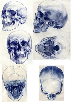 Skull done in blue pen.