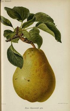 http://bibliotheque-numerique.hortalia.org/items/viewer/1861?ui=embed