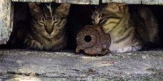 Carpeneto (AL): ignoti danno fuoco alla casa-rifugio dei gatti