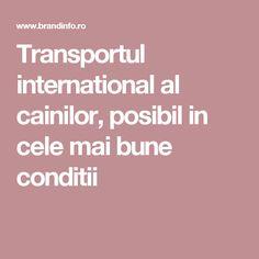 Transportul international al cainilor, posibil in cele mai bune conditii Transportation