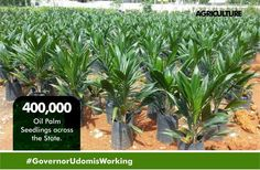 By Ekemini James Right from the inception of Governor Udom led-administration agriculture has received varying degrees of attention. In line with his industrialisation agenda and the results so far recorded within two years in office as the Executive Governor of Akwa Ibom State no one will be wrong to say that Governor Udom Emmanuel is a futuristics leader who is not just concerned about today but the future generation. In Akwa Ibom a breeze of fresh air seems to be blowing from a state deep…