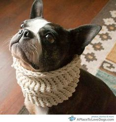 Not Quite a Bow Tie, But C'mon! Dog in Neck Warmer