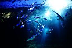 Aquarium du Trocadero, Paris, 2011