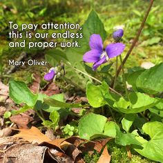 """""""To pay attention, this is our endless and proper work."""" ―Mary Oliver  Photo: Spring flowers blooming in May, Brown County, Indiana. 2015."""