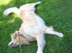 wann wird's mal wieder richtig Sommer ...?! ;) Columbo, wie er leibt und lebt ... in seinen Taschenbüchern: www.hunde-buch.com
