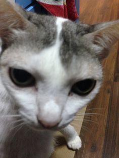 Meimei Cat | Pawshake