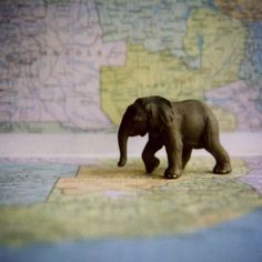 Elephant on Map 6x6 print by esoule on Etsy, $25.00
