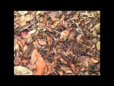 Earthworms easy documentary - YouTube