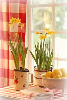 Is it Spring yet? by lucia and mapp, via Flickr