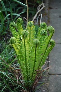 Beautiful fern