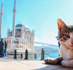 Cat at Ortaköy Mosque (Ortaköy Camii). #turkey #türkiye #istanbul #cat #kedi #büyükmecidiyecamii #beşiktaş