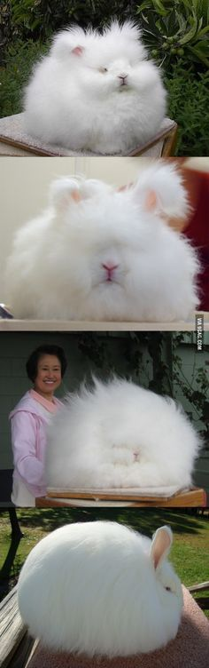 I present you the fluffiest creature ever