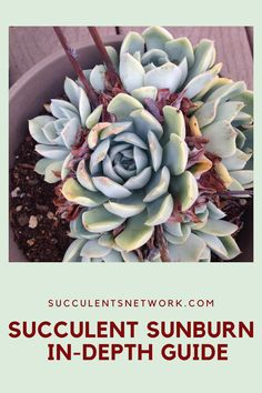 If you are struggling with keeping your plants healthy in summer, this guide explains how to protect your plants from strong sunlight! #summer #sunlight #sunburn #succulent #problems #gardeningforbeginners How To Water Succulents, Types Of Succulents, Planting Succulents, Gardening For Beginners, Gardening Tips, Drought Resistant Plants, Succulent Care, Photosynthesis, Potting Soil