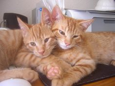 Fred and George in a rare moment of calm.