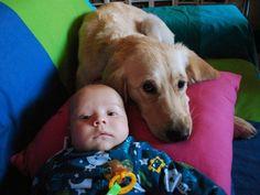 M¿Cómo preparar a mi perro para la llegada del bebé? Los primeros meses de convivencia  bebé