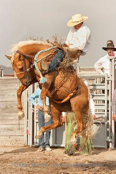 Will James Roundup, Ranch Rodeo, Ranch Bronc Riding, Hardin, Montana, Quinn Larsen.