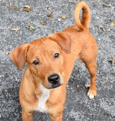 Banana Is Looking For A New Home – Clear The Shelters Pet Adoption Event