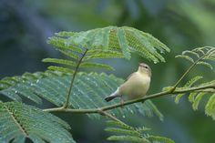 Galerie : sélection de photos d'oiseaux | Ornithomedia.com